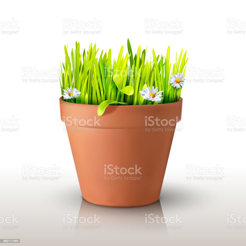 Grass and chamomiles in the pot vector art illustration
