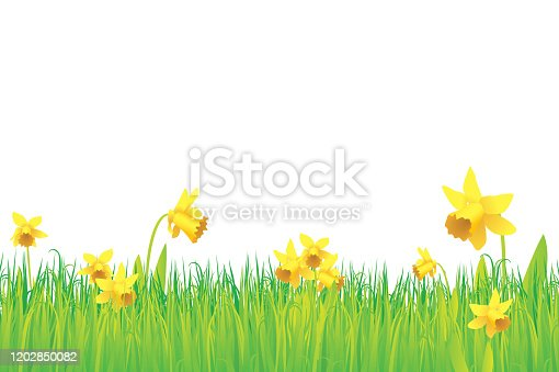 istock Grass and daffodils background 1202850082