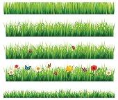 Flower and grass Set, Vector Illustration