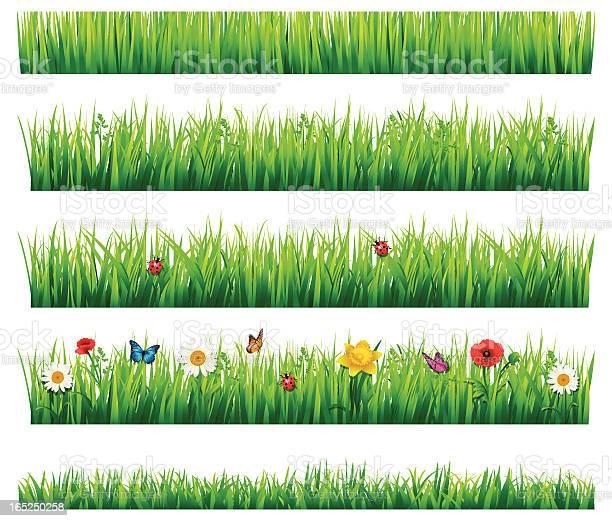 Grass and flowers set vector id165250258?b=1&k=6&m=165250258&s=612x612&h=mx2h4uebeom2 jexdjsulyujanditwlyq57aa 6ucw8=