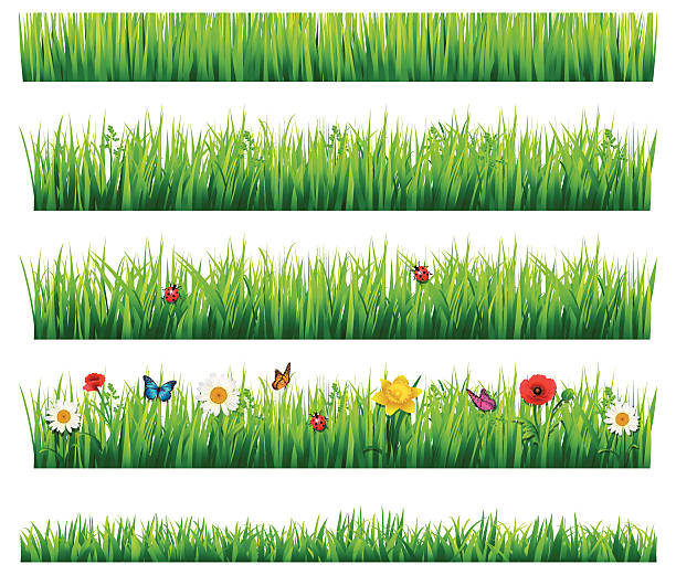Grass and flowers set Flower and grass Set, Vector Illustration bee borders stock illustrations