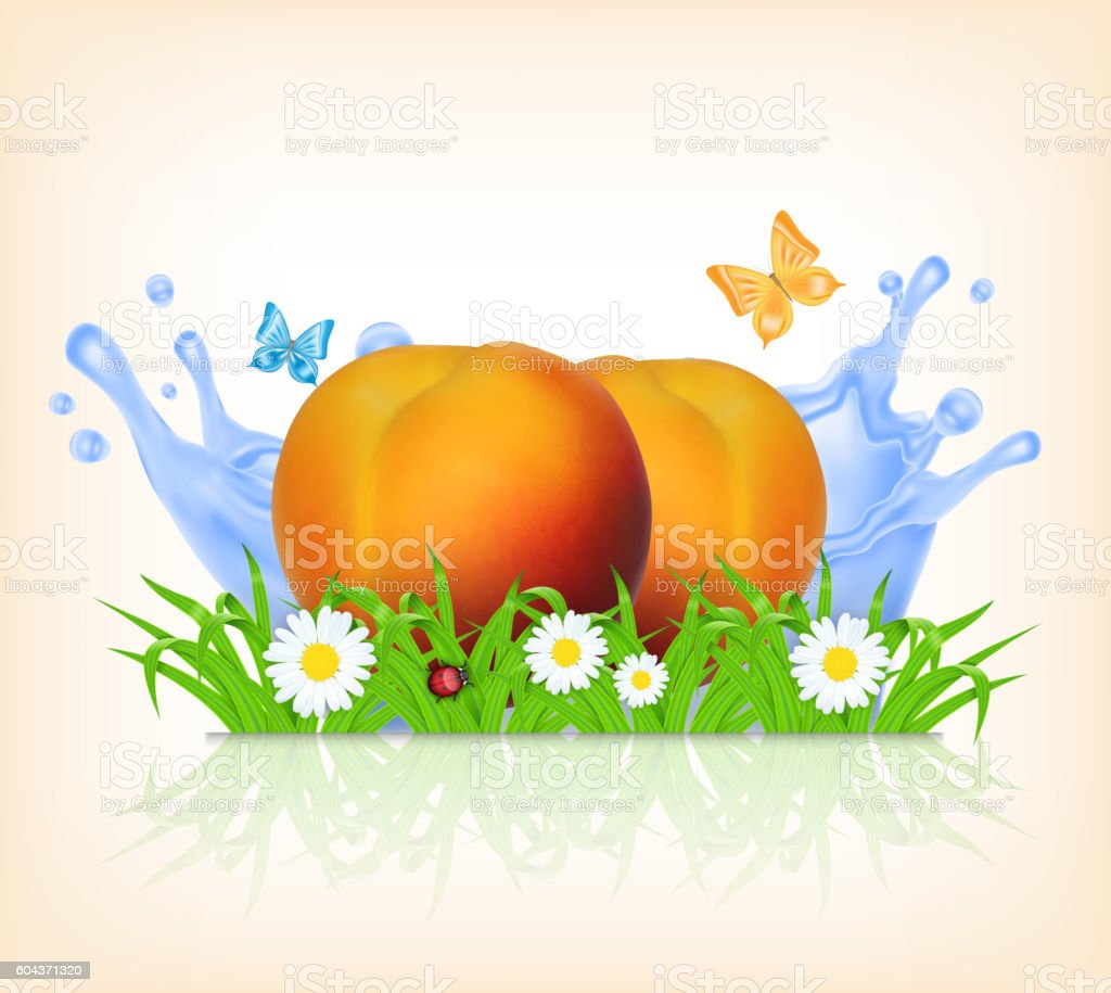 Grass and peach vector art illustration