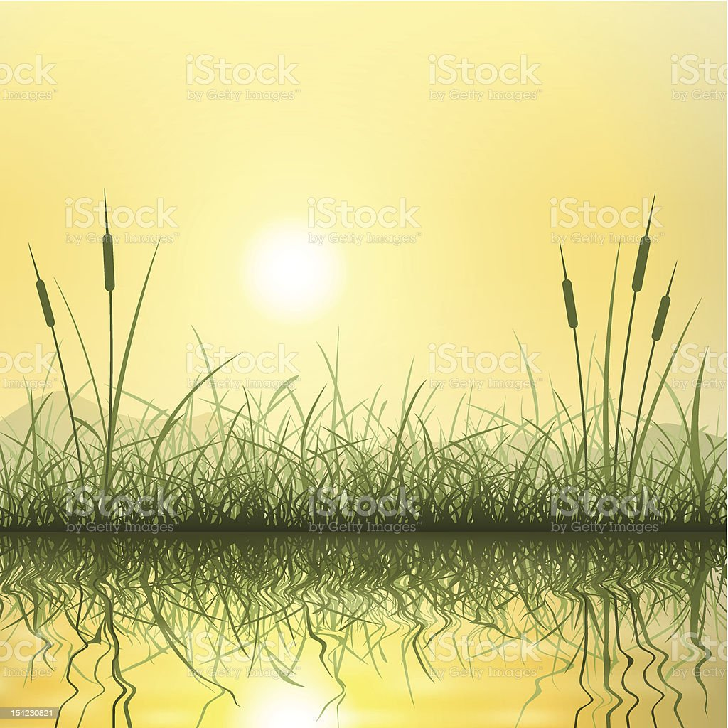 Grass and Reeds vector art illustration
