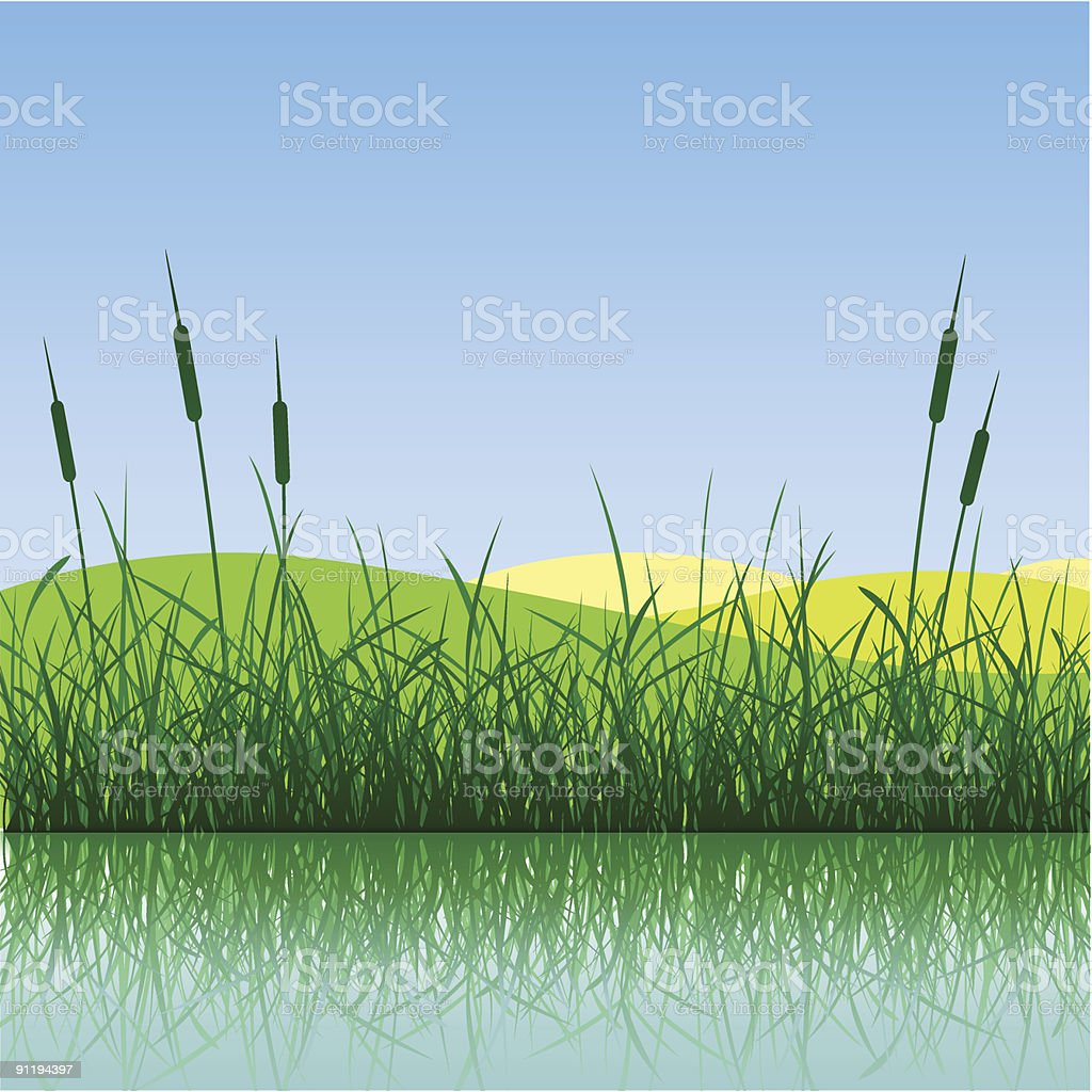 Grass and Water vector art illustration