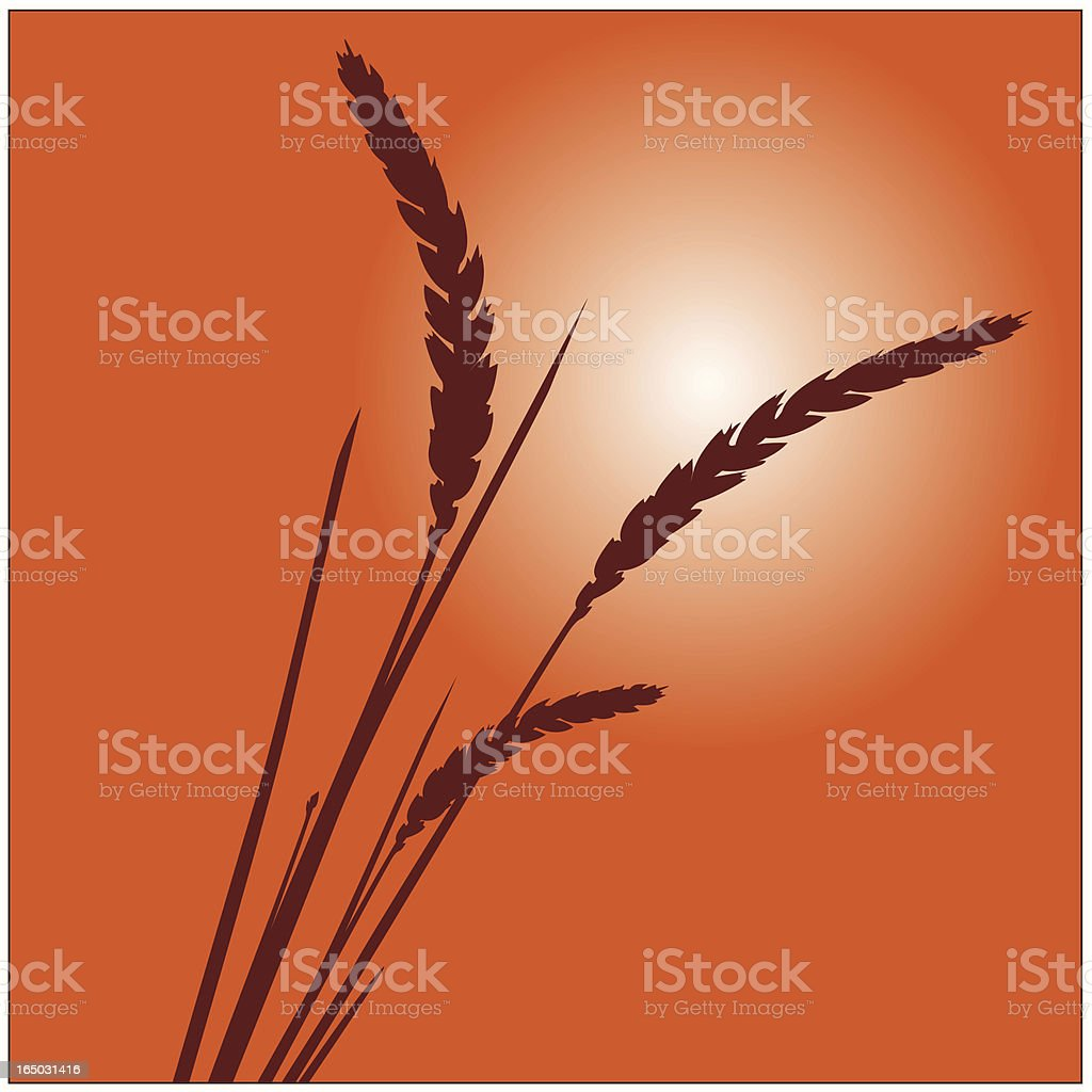 Grass and Wheat Plant Vector Illustration royalty-free grass and wheat plant vector illustration stock vector art & more images of back lit