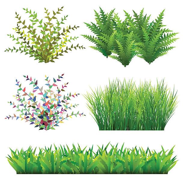 bildbanksillustrationer, clip art samt tecknat material och ikoner med grass and wild plants - buske