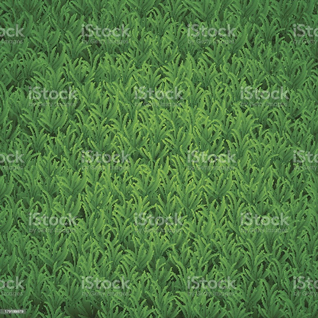 Grass background royalty-free stock vector art