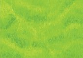 grass background. green meadow in a park