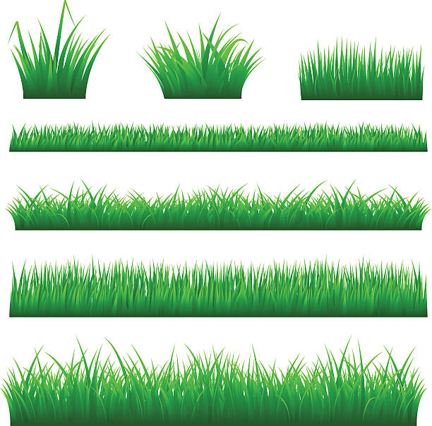 stockillustraties, clipart, cartoons en iconen met grass backgrounds - grasspriet
