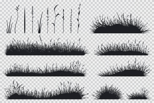 ilustrações, clipart, desenhos animados e ícones de silhueta de grama preta. conjunto de vetores de prado plantas isoladas em plano de fundo transparente. - gramado terra cultivada