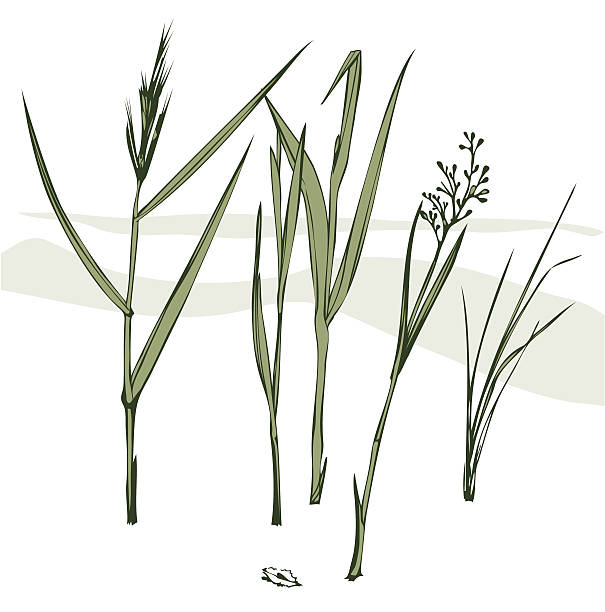 stockillustraties, clipart, cartoons en iconen met grass blades - grasspriet