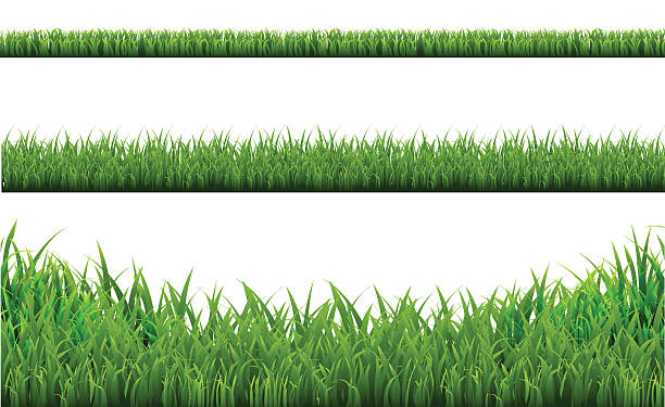 stockillustraties, clipart, cartoons en iconen met grass borders set - grasspriet