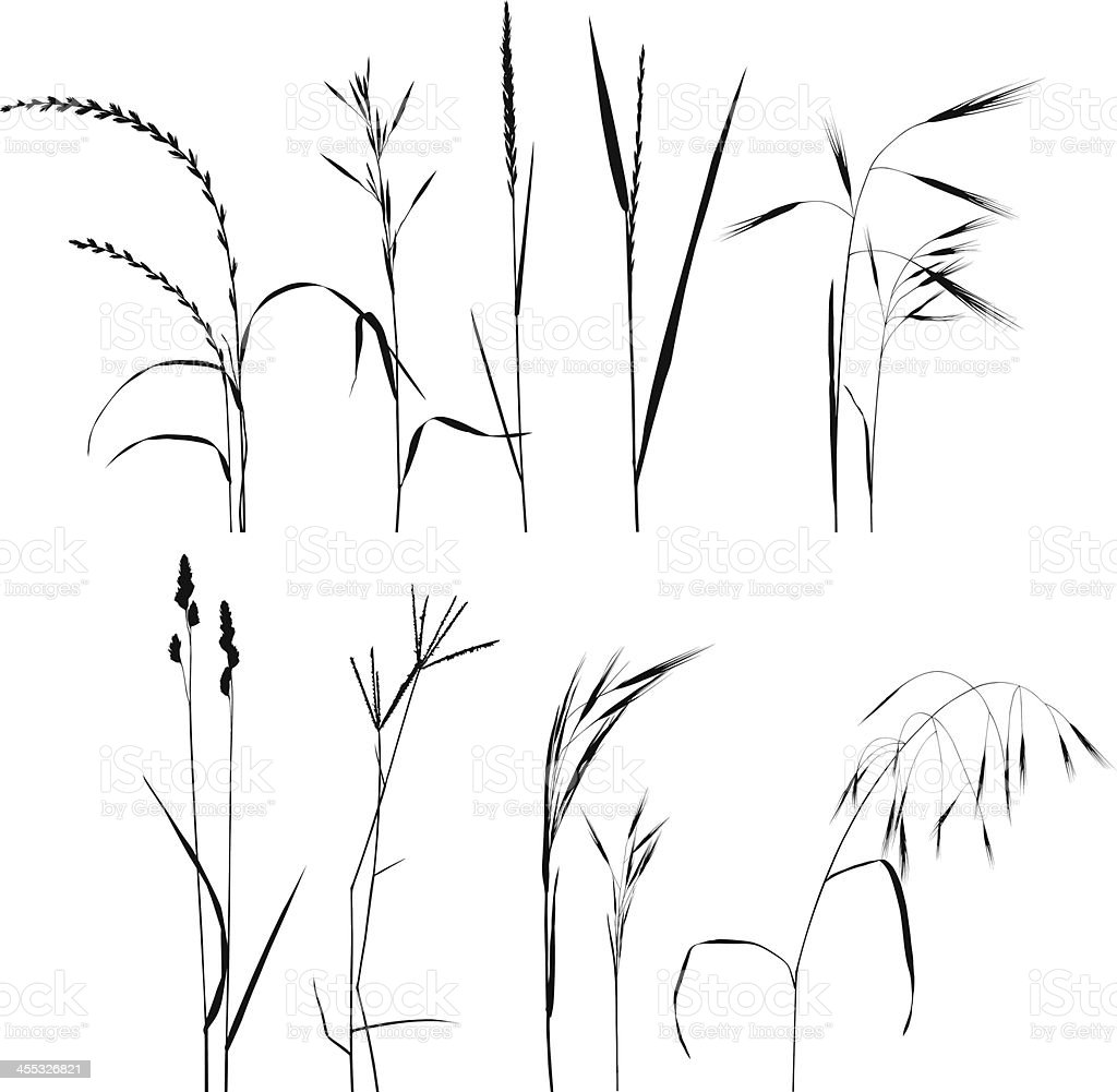 Grass Collection For Designers vector art illustration