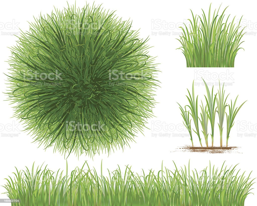 Grass Collection vector art illustration
