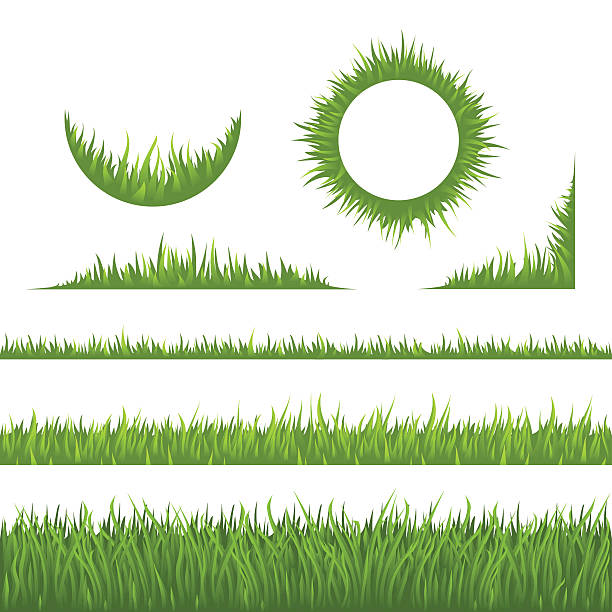 stockillustraties, clipart, cartoons en iconen met grass design elements - grasspriet
