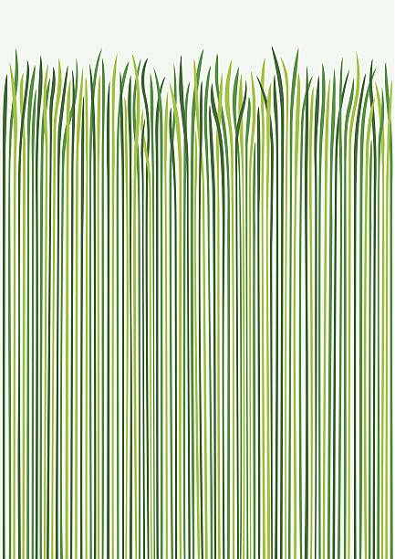 stockillustraties, clipart, cartoons en iconen met grass design - grasspriet