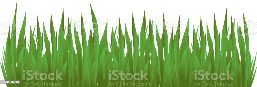 Grass Detail vector art illustration