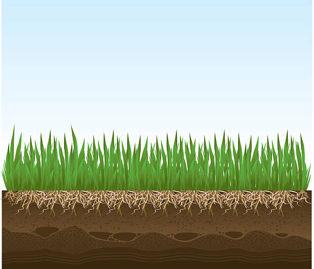 Royalty Free Cross Section Land Clip Art, Vector Images