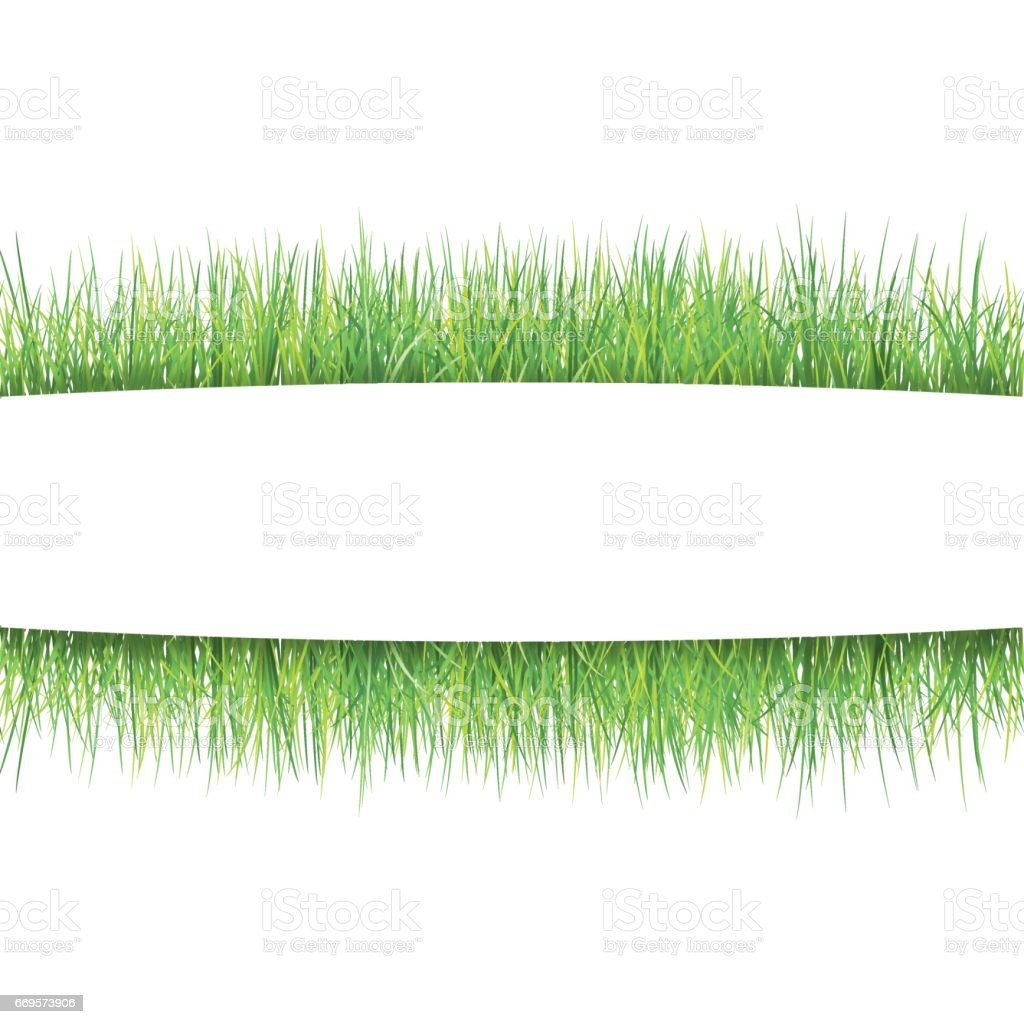 Grass Frame Summer Fresh Green Grass Borders On White Natural Vector ...