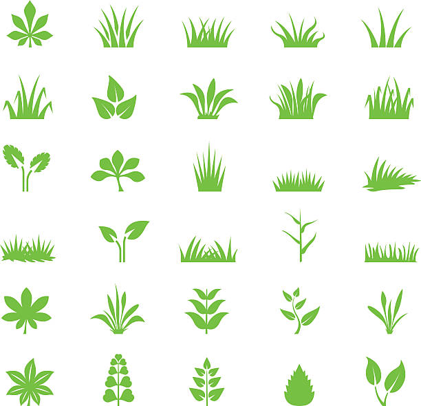 stockillustraties, clipart, cartoons en iconen met grass icon set - grassenfamilie