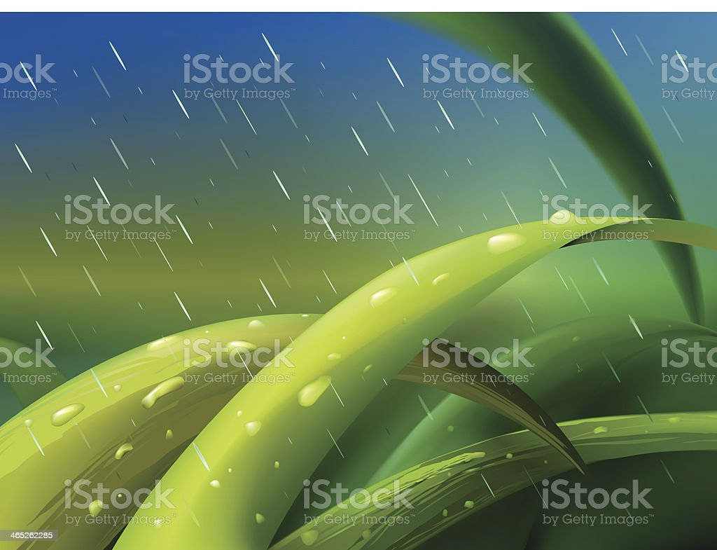Grass in rain vector art illustration