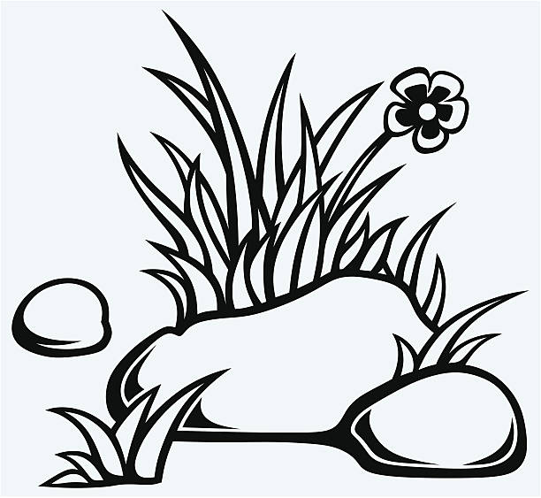bildbanksillustrationer, clip art samt tecknat material och ikoner med grass in stones - single pampas grass