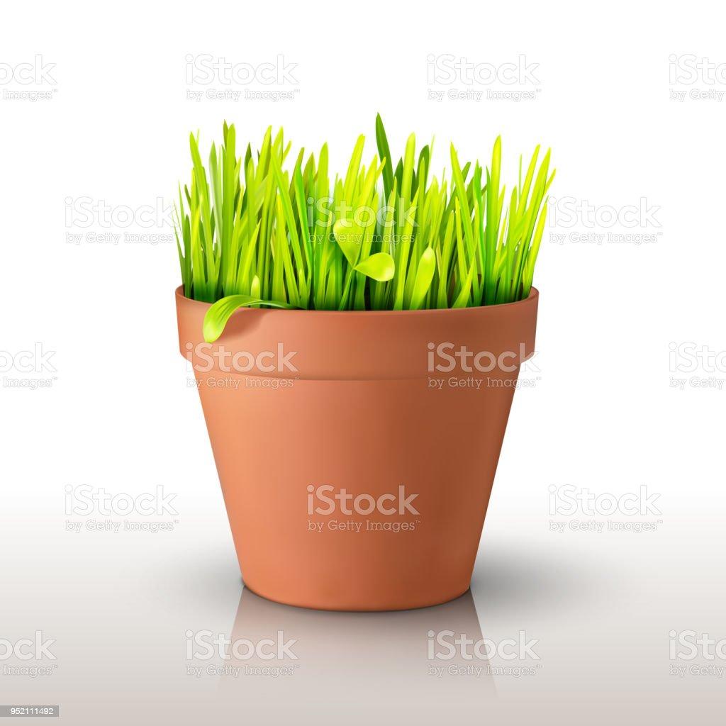 Grass in the pot vector art illustration