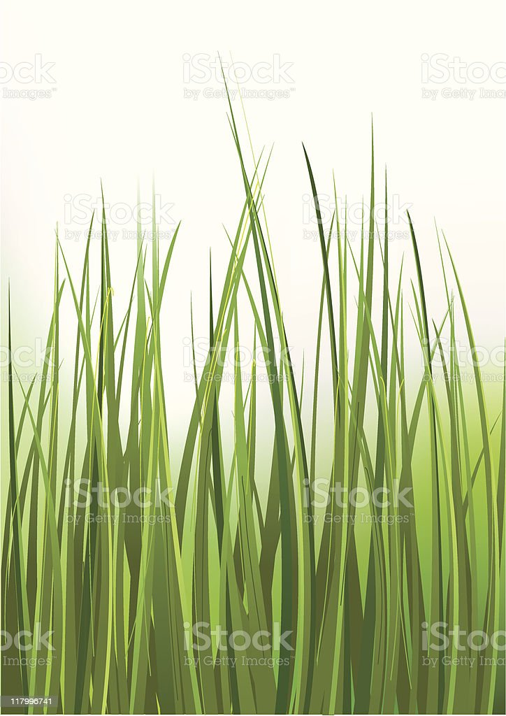 grass is green royalty-free stock vector art