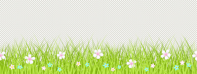Grass isolated vector seamless border with flowers.