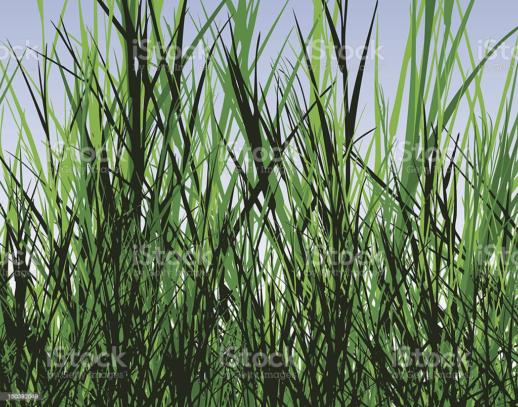 Grass jungle royalty-free stock vector art