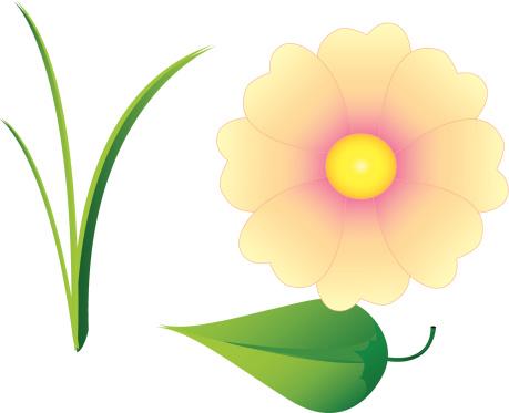 Grass, leaf, flower