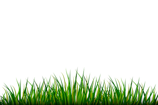 Grass on White background. Nature illustration. Vector pattern. Stock image. EPS 10.