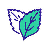 grass plant leaves peppermint icon vector outline illustration