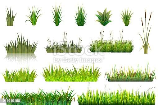 Grass vector grassland or grassplot and green grassy field illustration gardening set floral plants in garden isolated on white background.