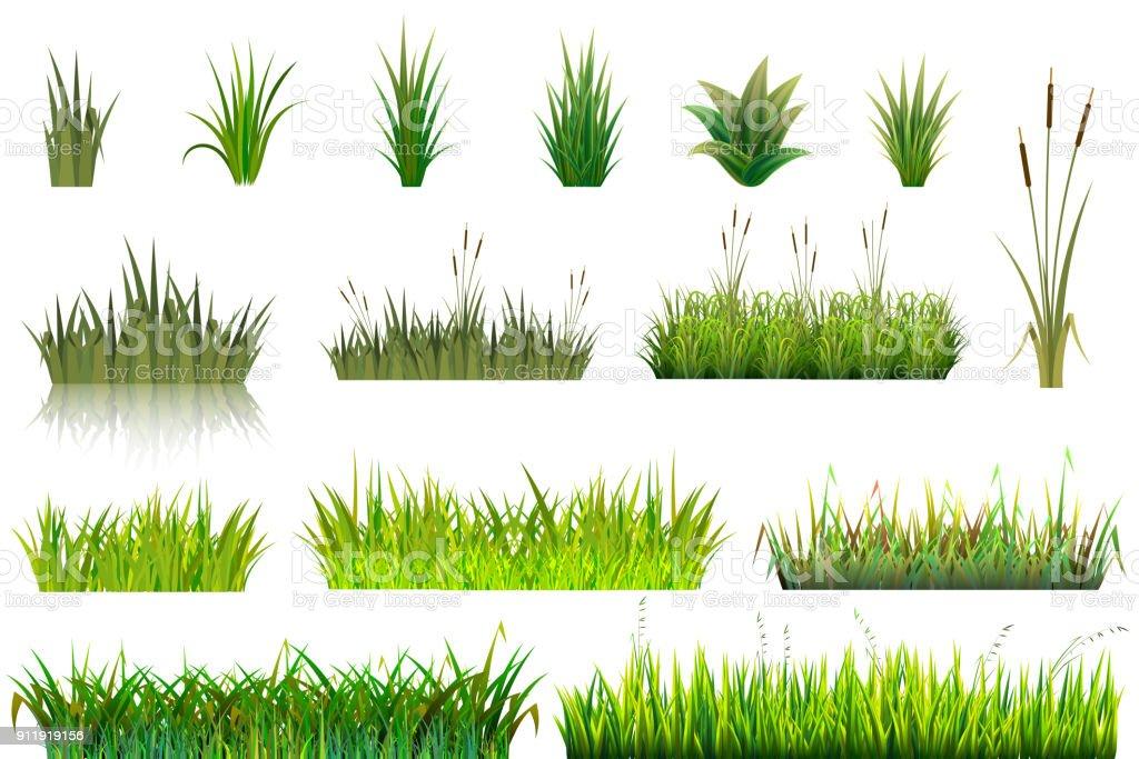 Grass vector grassland or grassplot and green grassy field illustration gardening set floral plants in garden isolated on white background vector art illustration