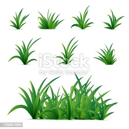 Realistic spring green grass isolated on white background. Vector nature elements for posters or advertisement.