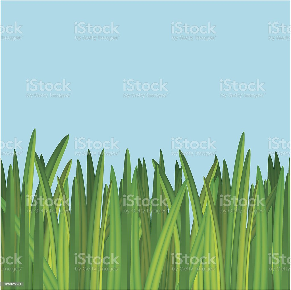 grass royalty-free grass stock vector art & more images of bermuda