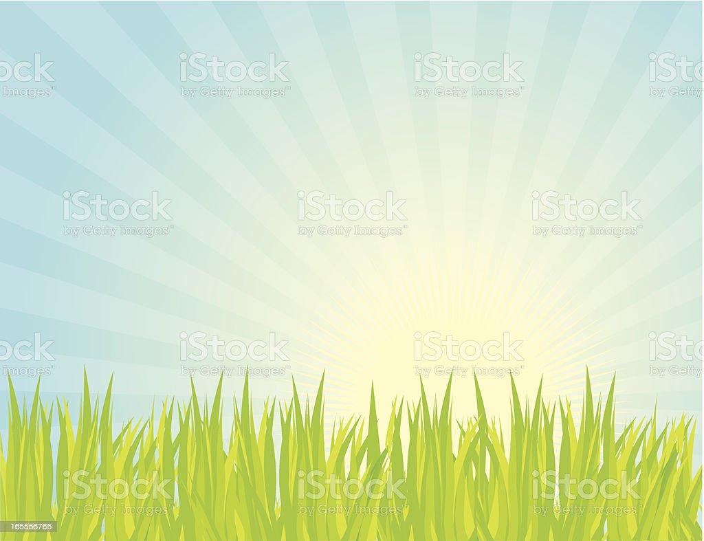 Grass vector art illustration