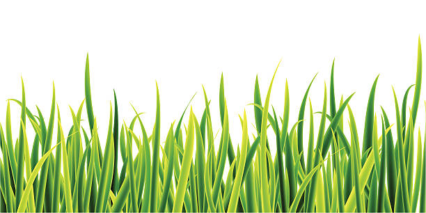 stockillustraties, clipart, cartoons en iconen met grass - grasspriet