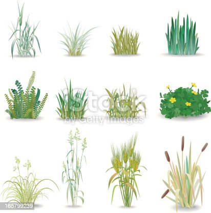 12 beautiful small shrub known grass