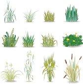 12 beautiful small shrub known grass
