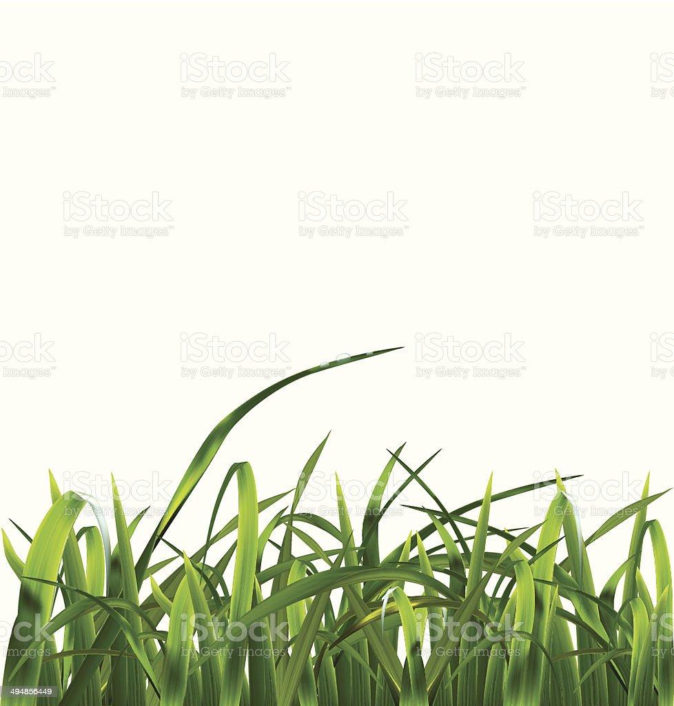 Grass. Vector ilustration vector art illustration