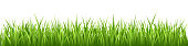 istock Grass Vector Seamless 1177004443