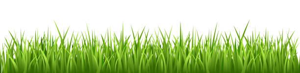 stockillustraties, clipart, cartoons en iconen met grass vector naadloze - grass
