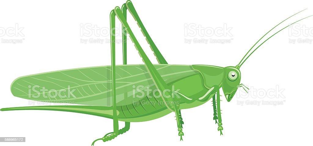 Grasshopper Cartoon vector illustration isolated on white background vector art illustration