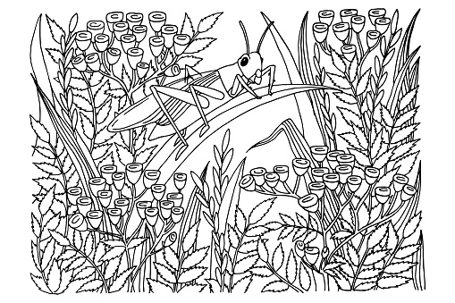grasshopper in tansy colors, coloring book, for adults, for children, hand drawn, black and white sketch, doodle, vector illustration