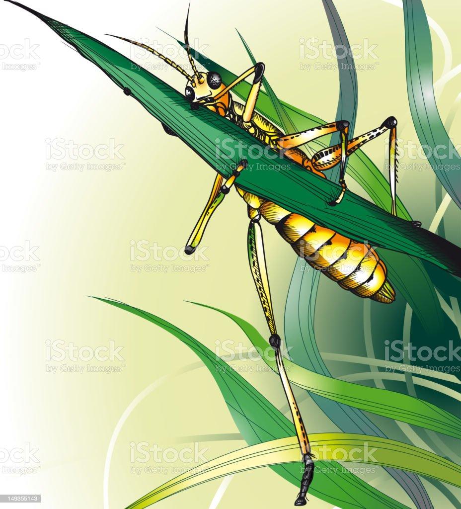 Grasshopper in the Grass. vector art illustration