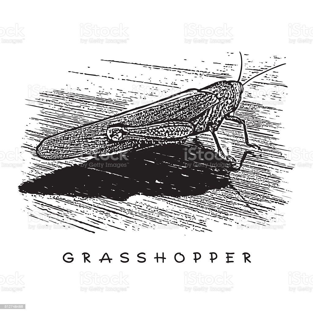 Grasshopper, Locust. vector art illustration