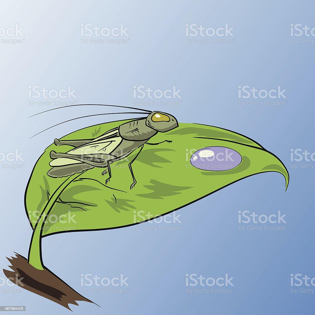 grasshopper royalty-free grasshopper stock vector art & more images of animal