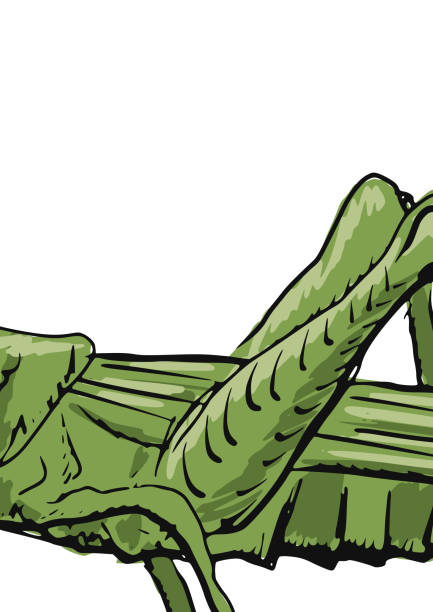 Best Cricket Animal Cartoon Illustrations, Royalty-Free ...